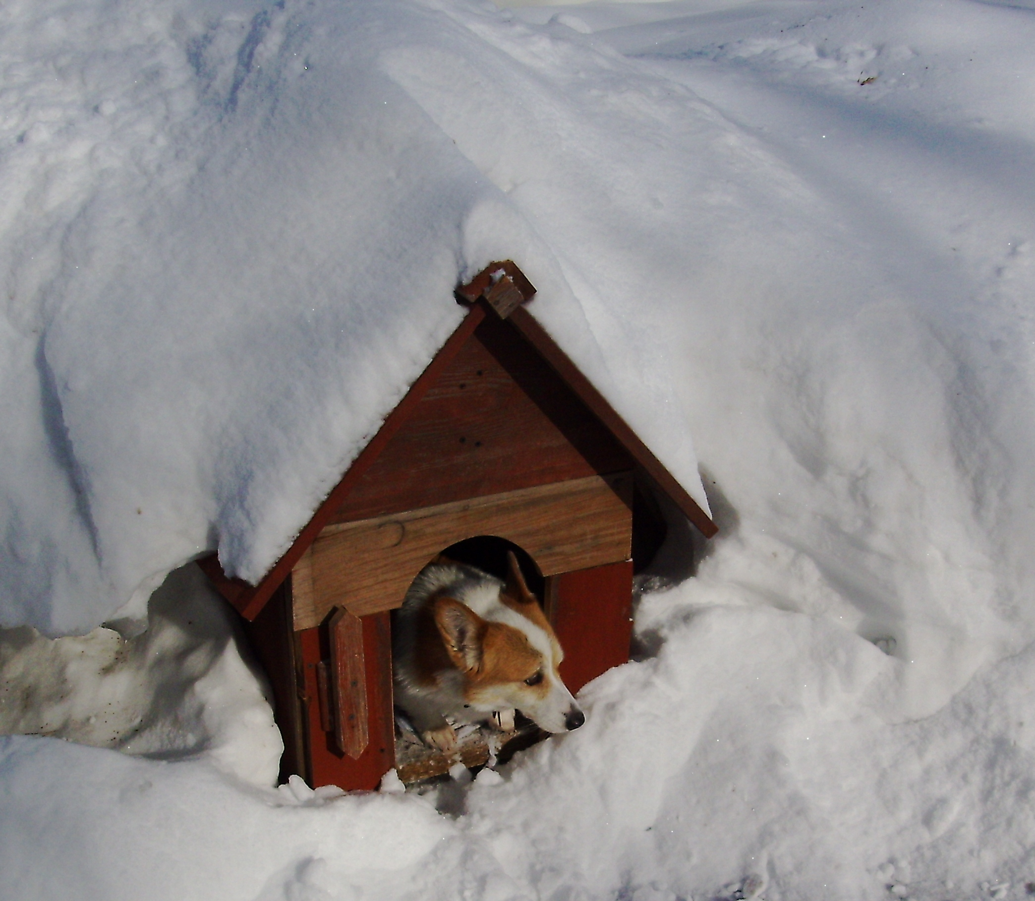 Ways To Heat A House shawano's pet daycare center shares 5 ways to keep your pet warm
